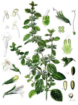 herbs to help bursitis and tendinitis